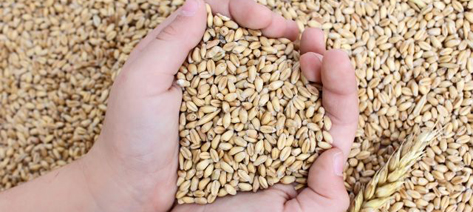 Hands holding seeds. Photo: Shutterstock