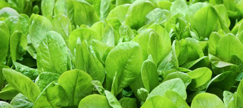 Spinach. Photo: Shutterstock